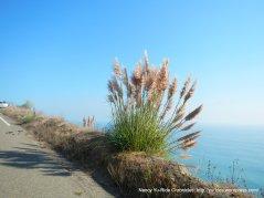 CA-1 S coastal views