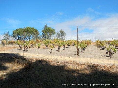 vineyard dr vines