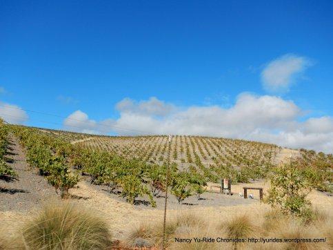 turley wine cellars vineyards