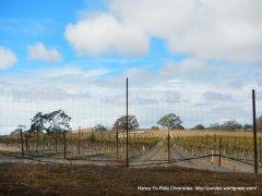s bethel rd vineyards