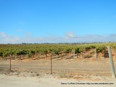 CA-46 E vineyards