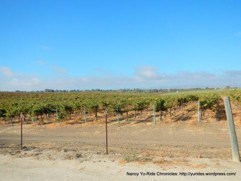 CA-46 E vineyards