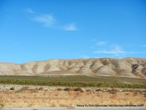 valley vineyards-cholame hills