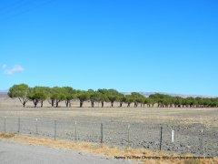 tree-line road