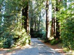 cascade dr redwoods