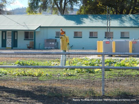 parkfield scarecrow