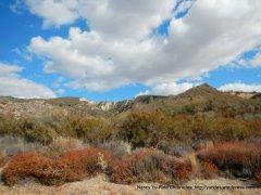 vineyard canyon landscape