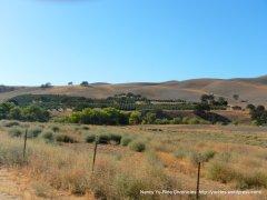 vineyard canyon
