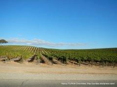 airport rd vineyards
