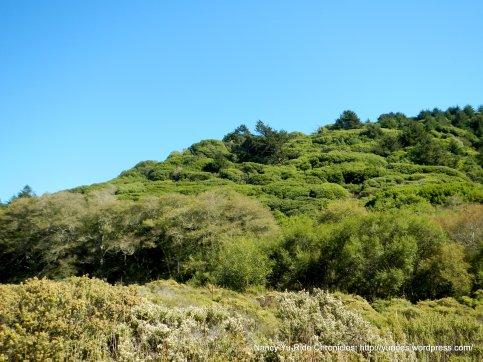 tam landscape