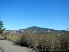 sonoma mountain
