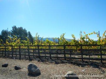 bennett valley vines