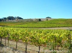 bennett valley vineyards