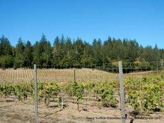 lawndale vineyards