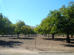 lawndale orchard