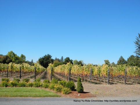 kaz vineyards