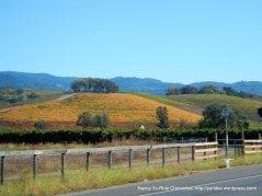 CA-12 vineyards