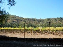 warm springs rd vineyards