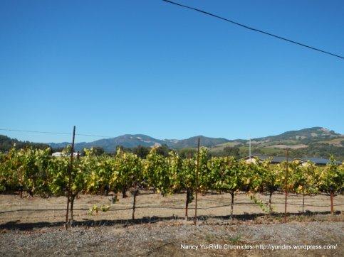 valley vineyard