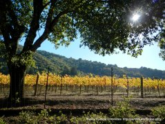 sonoma mountain vineyards