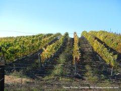 hilltop vineyards