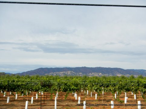 mayacamas mountains
