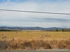 sheep ranch