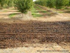 Road 25 walnuts