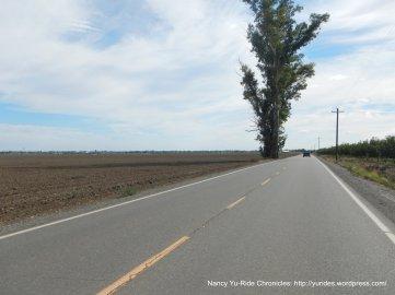 road 99