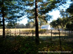 redwood rd-vineyard
