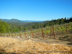 Mt veeder summit views