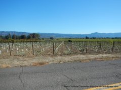 dry creek rd-napa valley