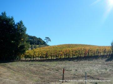 thompson ave vineyards