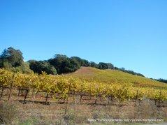carneros valley vineyards