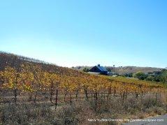 henry rd vineyards