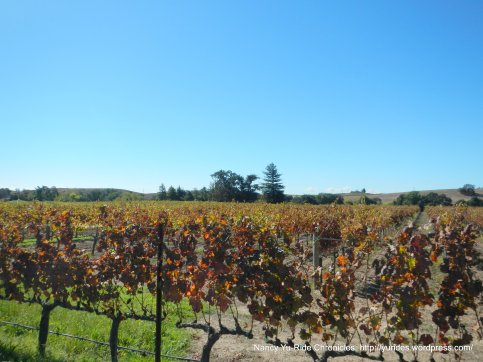 dealy ln vineyards