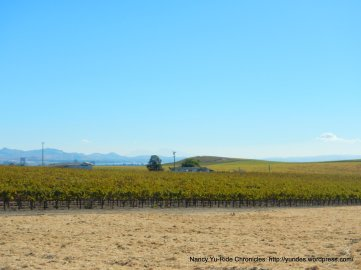 las amigas vineyards