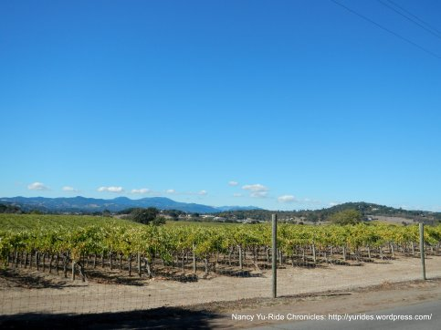 4th ave vineyards