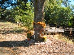 wild horse valley rd memorial