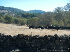 wild horse valley rd