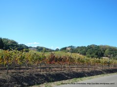 east valley vineyards
