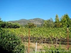 olive hill ln vines