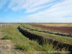 opne field
