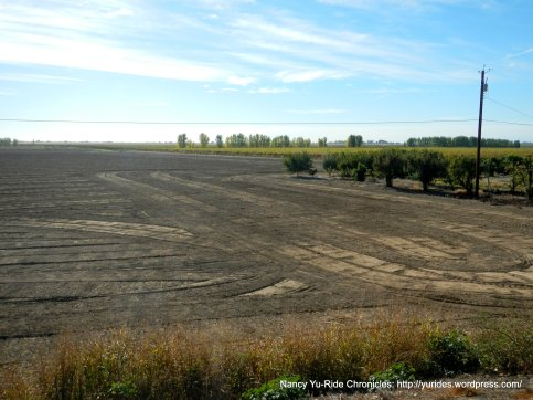 fallow field
