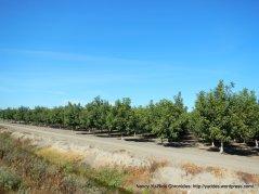 woodbridge rd orchards
