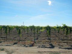woodbridge rd vineyards
