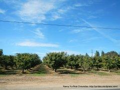 woodbridge wine trail