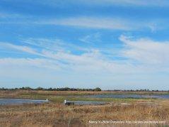 ci=onsumnes river preserve