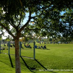 barney schwatrz park