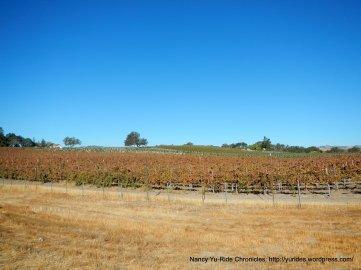 CA-46 W vineyards